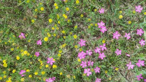 The wildflowers were wonderful in early June