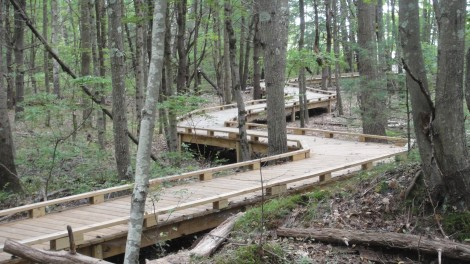 The Peverly Pond Trail is almost entirely boardwalk.