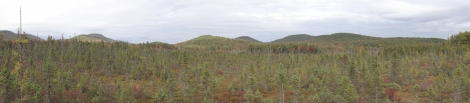 A panorama view from the Bradford Bog observation deck