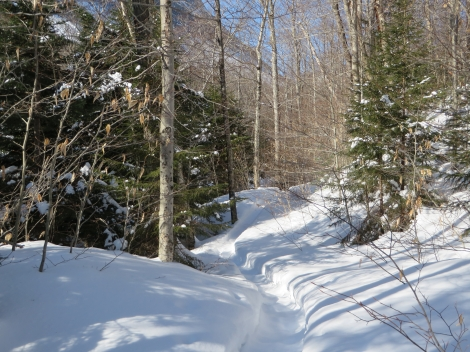 Snowshoers have packed the perfect trail
