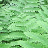 A Secret Garden - The Hobbs Fern Sanctuary