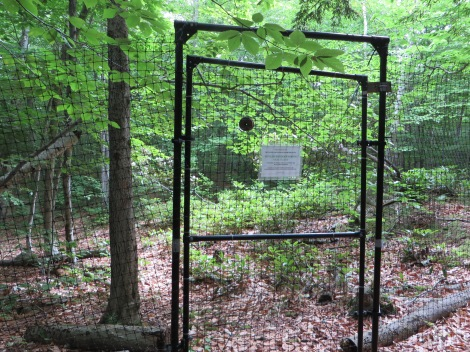 A chain-link fence surrounds the sanctuary, no doubt keeping out deer.