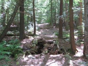 Decomposed bridge on Lost Trail