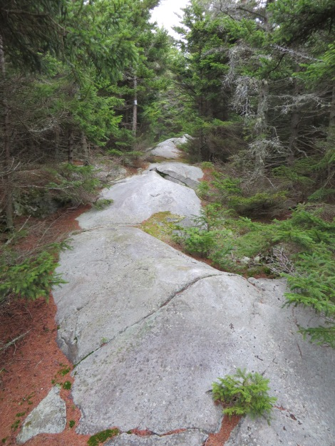 The trail follows the glacier-smoothed crest of the long ridge leading to Lucia's Lookout