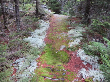 Mosses can still grow on this trail