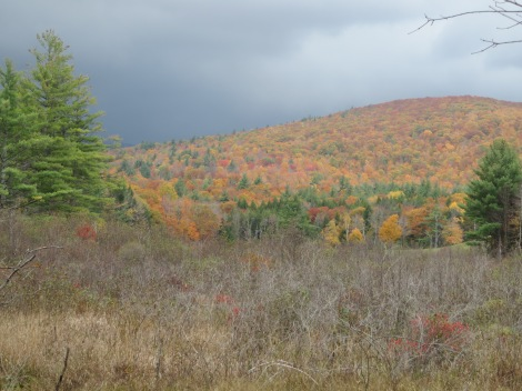The sun came out later in the day between storms.  They're hard to see but in the foreground are bright red winterberries