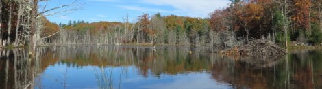 Beaver Pond at Long Marsh Preserve in Durham - Start of the Sweet Trail
