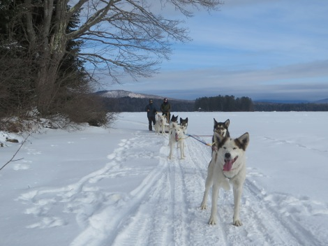 The dogs of Mahoosuc Guide Service were ready, willing, and able!