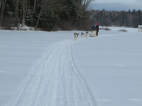 Driving our own dogsled