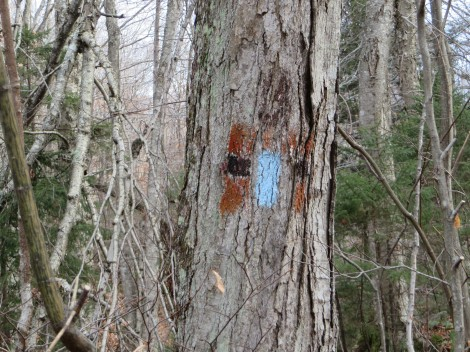 This tree tells of 3 trails: orange and black of the Dartmouth Outing Club, then white (above but painted over) when this was the Appalachian Trail, and now blue for the Daniel Doan Trail