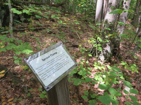 The nature trail signs are well-written and informative